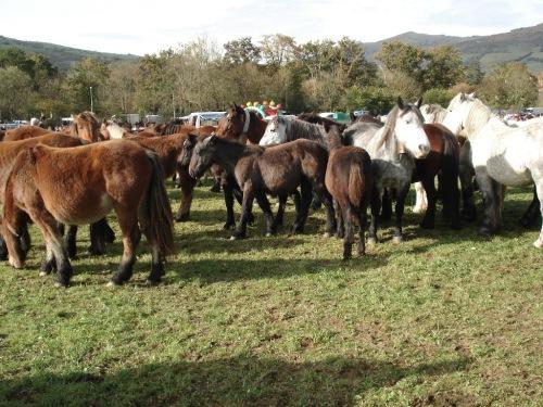feria-caballos